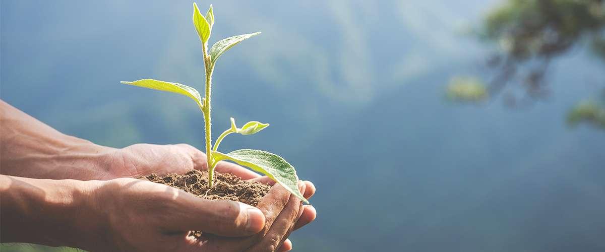 كيف نعلّم أبناءنا أهمية البيئة
